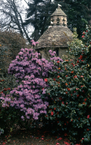 RHODODENDRONS & DOVECOTE