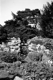 Whitby gardens
