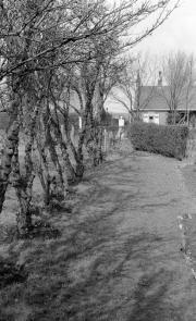 Tree walk at Hill Crest