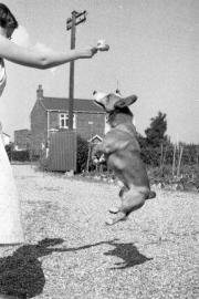 Dai jumping