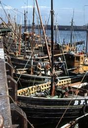 Herring fleet