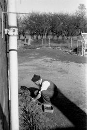 Dad gardening