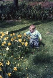 David and Daffodils