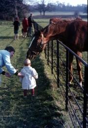 David and horses