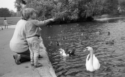 Greta and Simon feeding the ducks (and swans)