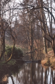 The stream in the Spinney