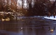 Ducks on the frozen lake