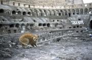 Cat in the Coliseum