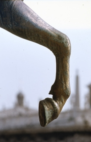 San Marco - Original horse's leg and hoof