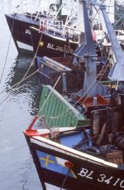 Bows of fishing boats