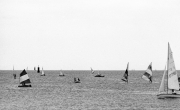 Windsurfers and sailors