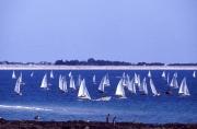 Regatta in Letty bay