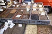 Benodet Market - herbs
