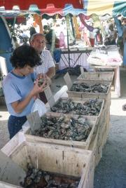 Benodet Market - oysters