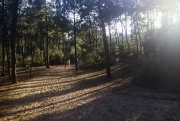 Path through the pine wood
