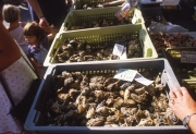 Oyster stall