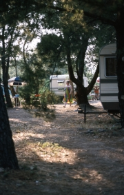 Greta walking through the trees