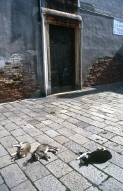 Campo S.Marcial - cats in the sun