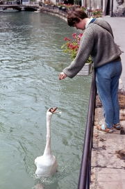Greta feeding a swan
